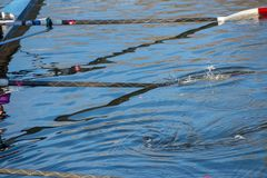 Red and white oars splashing in water unsynchronised. Ladies 8 rowing team with blades dipping into river Avon Royalty Free Stock Photos