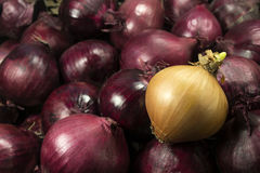 Red and white onion. White onions on a background of red onion Stock Photography