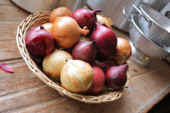 Red and White Onions Royalty Free Stock Photos