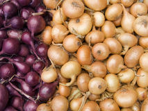 Red and white onions. Agricultural background, a pile of beautiful bulb onions Stock Photography