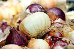 Red and White Onions Stock Photos
