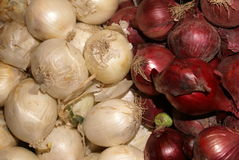 Red And White Onions. Red and white bio onions on display stock photo
