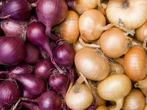 Red and white onions background Royalty Free Stock Photos