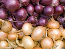 Red and white onions horizontal Royalty Free Stock Images