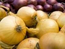 Red and white onions macro Stock Image