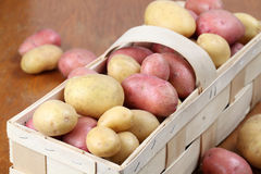 Red and white organic potatoes Royalty Free Stock Photo