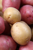 Red and white organic potatoes Stock Image