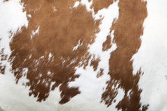 Red and white pattern on cowhide Stock Images