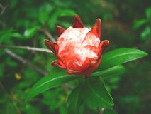 Red White Petaled Flower Close Up Photography Stock Photo