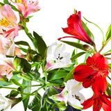 Red, white, pink alstremeria flowers Royalty Free Stock Image