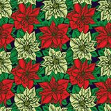 Red and white poinsettia on dark blue background. Red and white poinsettia, hand drawn doodle sketch color illustration, seamless pattern design on dark blue Royalty Free Stock Photo
