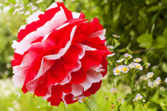 Red and white pompon and flowers Royalty Free Stock Photos