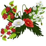 Red and white poppies with daisies Stock Photography
