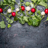 Red and white radishes with green haulm leaves on dark  rustic background, top view Royalty Free Stock Photo