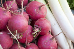 Red and white radishes Stock Photos