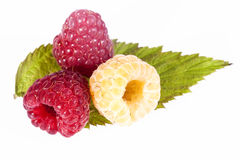 Red and white  raspberries on leaf isolated on white background.  Royalty Free Stock Image