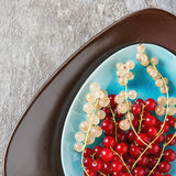 Red and white ripe currant on a blue plate. Dark wood background.  Stock Photos