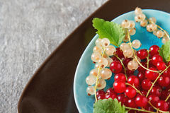 Red and white ripe currant on a blue plate. Dark wood background.  Stock Photography