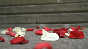 Red, white rose petals scattered on a marble tile stock footage