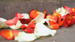 Red, white rose petals scattered on a marble tile stock video