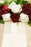 Red and white roses Stock Photos