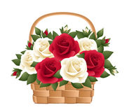 Red and white roses in basket. Stock Photography
