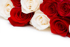 Red and white roses isolated Stock Images