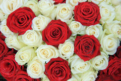 Red and white roses in a wedding arrangement. Red and white roses in a bridal floral arrangement Royalty Free Stock Photography