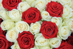 Red and white roses in a wedding arrangement. Red and white roses in a bridal floral arrangement Royalty Free Stock Images