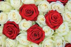 Red and white roses in a wedding arrangement. Red and white roses in a bridal floral arrangement Stock Photography