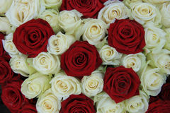 Red and white roses in a wedding arrangement. Red and white roses in a bridal floral arrangement Stock Photo
