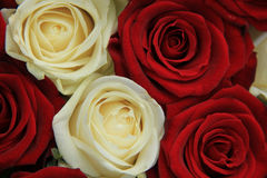Red and white roses in a wedding arrangement. Red and whte roses in a wedding centerpiece Royalty Free Stock Image