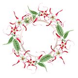 Red white strophantus botanical flowers. Wild spring leaf wildflower. Watercolour drawing fashion aquarelle isolated. Red white strophantus floral botanical vector illustration