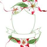 Red white strophantus botanical flowers. Wild spring leaf wildflower. Watercolour drawing fashion aquarelle isolated. Red white strophantus floral botanical royalty free stock photo