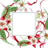 Red white strophantus botanical flowers. Wild spring leaf wildflower. Watercolour drawing fashion aquarelle isolated. Red white strophantus floral botanical stock image