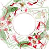 Red white strophantus botanical flowers. Wild spring leaf wildflower. Watercolour drawing fashion aquarelle isolated. Red white strophantus floral botanical stock photo