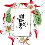 Red white strophantus botanical flowers. Wild spring leaf wildflower. Watercolour drawing fashion aquarelle isolated. Red white strophantus floral botanical royalty free stock image
