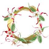 Red white strophantus botanical flowers. Wild spring leaf wildflower. Watercolour drawing fashion aquarelle isolated. Red white strophantus floral botanical royalty free illustration