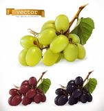 Red and white table grapes, wine grapes. 3d vector icon set. Red and white table grapes, wine grapes. Fresh fruit, 3d vector icon set Stock Photos