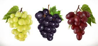 Red and white table grapes, wine grapes. Vector icon set Stock Photo