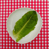 Red and White table map with lettuce leaf Stock Images