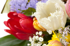 Red and white tulips in bouquet, close-up Stock Images