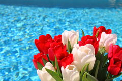 Red and white Tulips Bouquet Stock Image