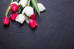 Red and white tulips flowers on black textured  background. Selective focus. Place for text. Flat lay Stock Image