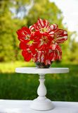 Red-and-white tulips in a grey vase on a white flower stand stock photo