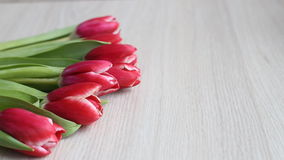 Red-white tulips lie on a white table stock footage