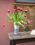 Red and white tulips in a vase Stock Photos