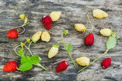 Red and white wild strawberry with green leaves on an old gray wooden table royalty free stock image