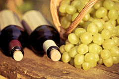 Red and white wine bottles and bunch of grapes Royalty Free Stock Image