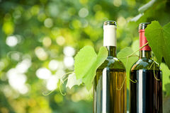 Red and white wine bottles and vine. Red and white wine bottles and young vine against natural spring background royalty free stock photos